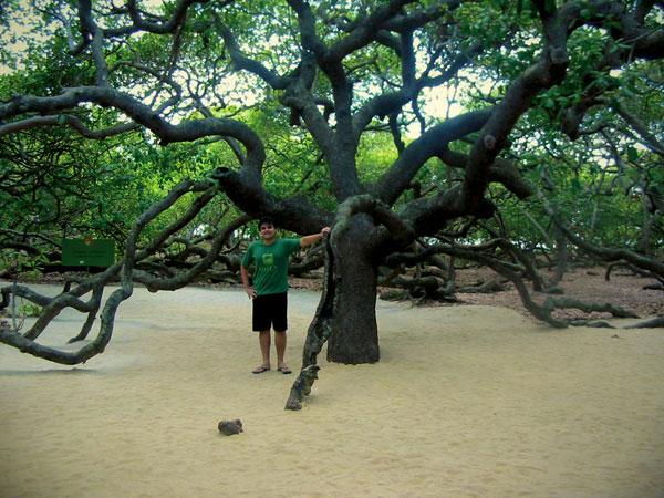 O tronco do maior cajueiro do mundo - Natal - Fui e Vou Voltar - Alessandro Paiva