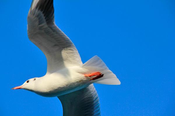 Gaivota voa perto da balsa - Istanbul - Fui e Vou Voltar - Alessandro Paiva