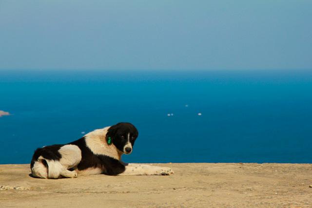Cachorro no mirante, com Mar Morto ao Fundo, em Anadolu Kavağı