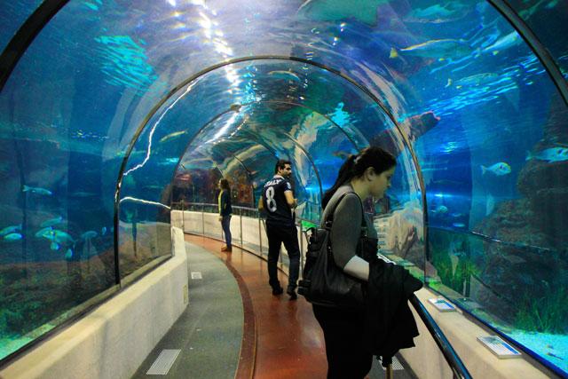 Túnel subaquático, no Aquarium Barcelona