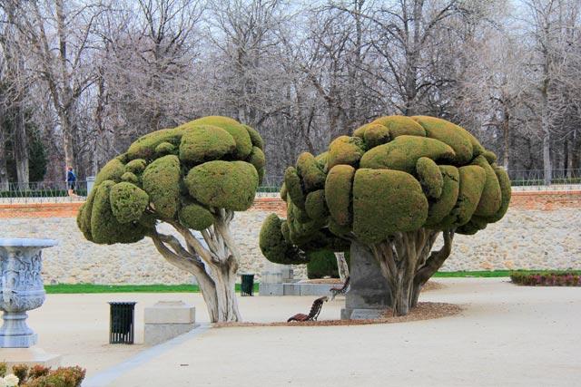Árvores com poda especial, no Parque del Retiro