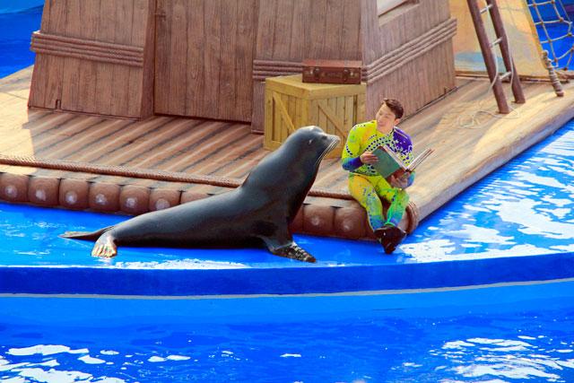 Apresentação teatral com o leão marinho do Ocean Wonders