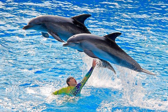 Apresentação dos golfinhos do Ocean Wonders