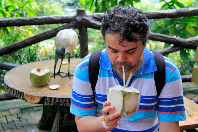 Élcio e tântalo-branco tomam suas águas de coco, no Bird Park