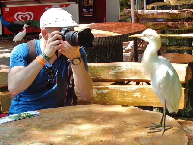 Interajo tranquilamente com a garça-vaqueira, no Bird Park