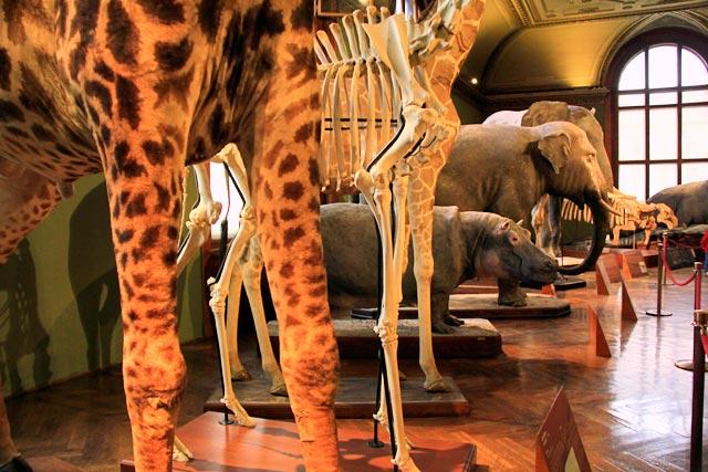Exposição do Naturhistorishes Museum