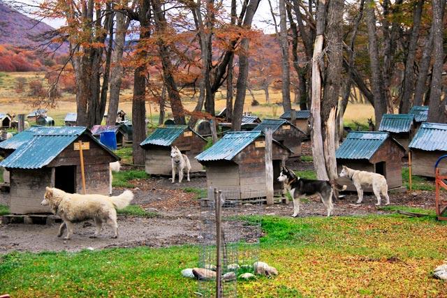 Huskies puxadores de trenó, no Centro Invernal Villa las Cotorras