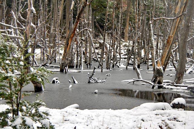 Castoreira, no Parque Nacional Tierra del Fuego