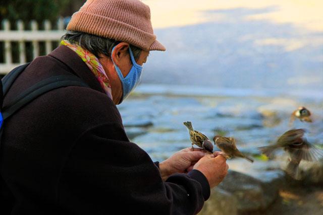Senhor dá de comer a pardais, em praça ao lado do Santuário de Jongmyo
