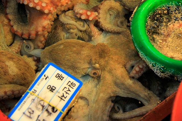 Polvo ainda vivo, à venda no Noryangjin Fisheries Wholesale Market